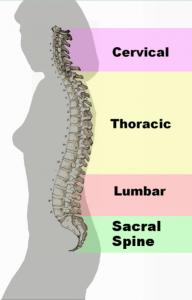 chiropractor monroeville