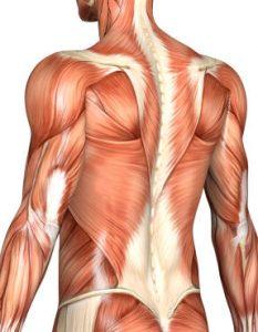 chiropractor massage monroeville